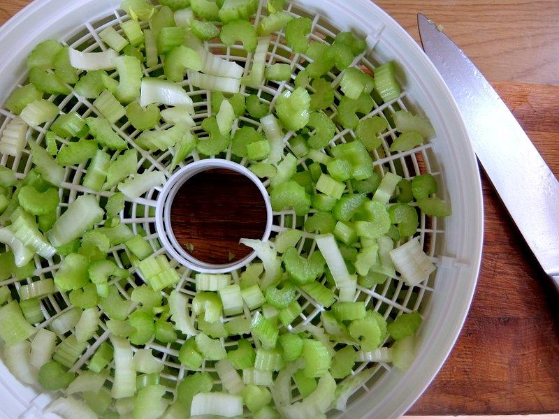 Celery In A Dehydrator