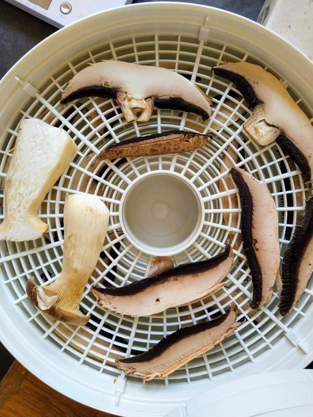 Dehydrating Mushrooms In Oven Or Dehydrator